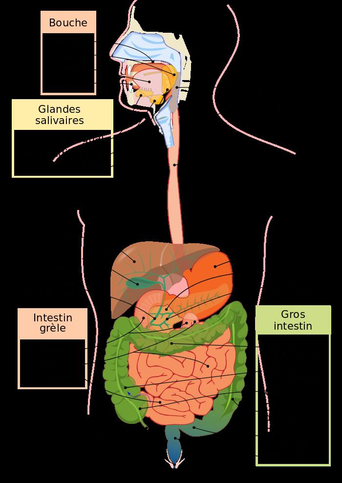Unealimentation quotidienne appropriée dans la maladie de Crohn